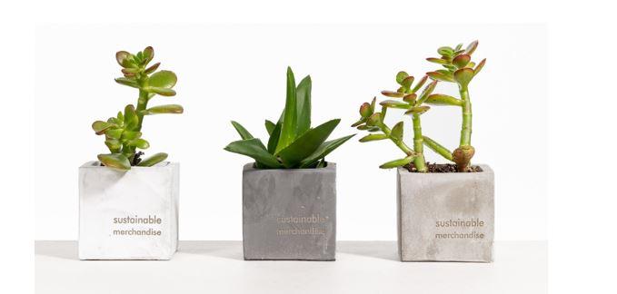 Plant ideas by Blank